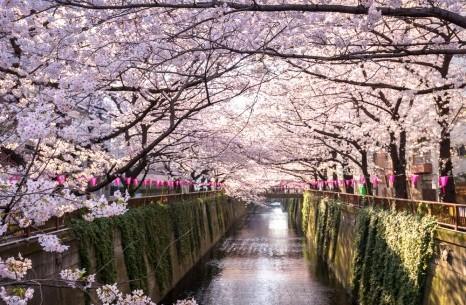 ĐỊA ĐIỂM NGẮM HOA ANH ĐÀO Ở TOKYO - OSAKA